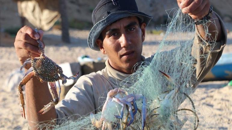 السلطعونات… مأكولات بحرية تستهوي أهالي غزة